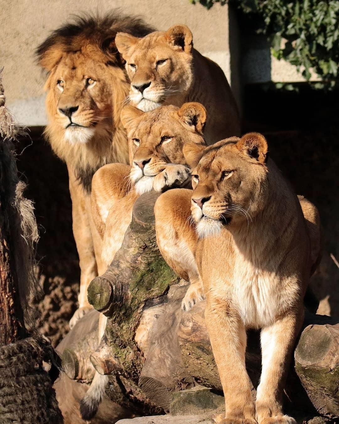 leoni in team
